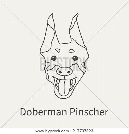 Doberman Pincher. Head dog doberman in a linear style. Graphics outline element for your design. Vector illustration