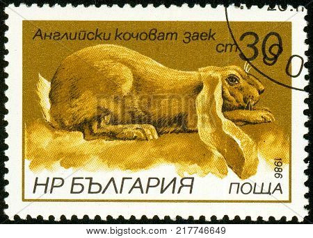 Ukraine - Circa 2017: A Postage Stamp Printed In Bulgaria Shows Irish Setter, Common Pochard, Aythya