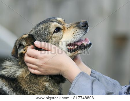hands devocional the face of a cute happy dog friend