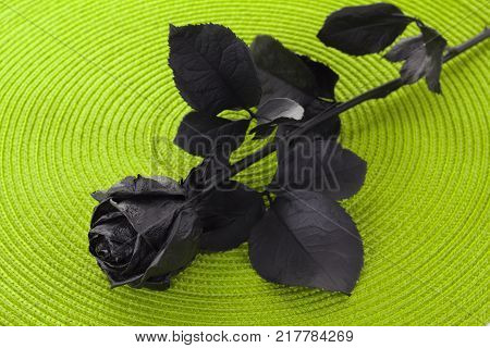 Black Rose Close-up