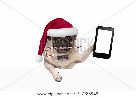 cute Christmas pug dog with santa hat and candy cane holding up mobile smart phone paw leaning on white banner isolated