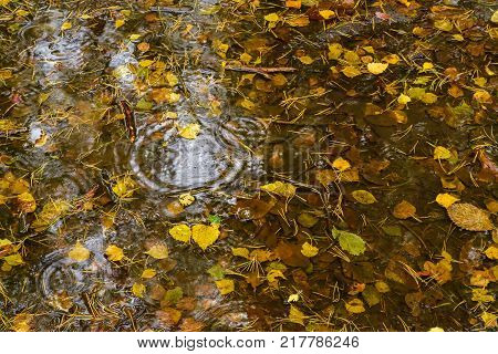 Autumn leaves lie in a puddle. Autumn rain in the forest. View from above