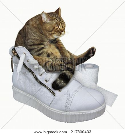The cat with roll of toilet paper is on a white sneakers. White background.