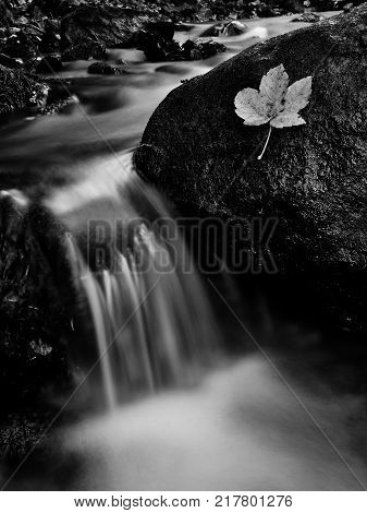 Autumn flowing mountain stream waterfall in Slovakia. Colored leafs on moss rock. Fresh natural water.