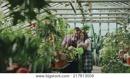 Happy young florist couple in apron working in greenhouse. Cheerful wife embrace her husband watering flowers with garden pot