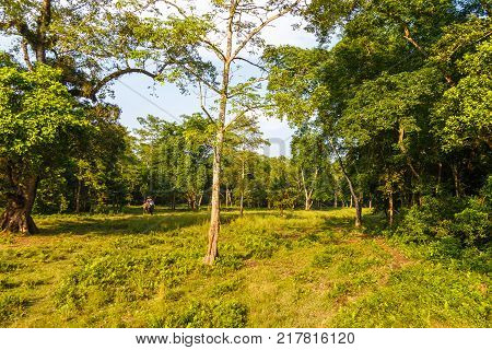 Beautiful View Inside Of The Forest In The Chitwan