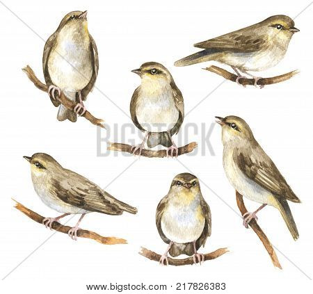 Watercolor painting. Hand drawn animalistic illustration. Aquarelle sketch of forest birds sitting on tree branches. Songbirds isolated on white.