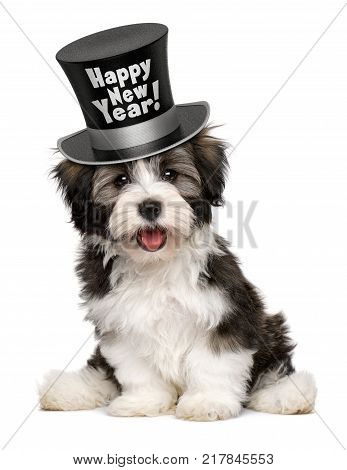 Happy smiling havanese puppy dog is wearing a black Happy New Year top hat isolated on white background