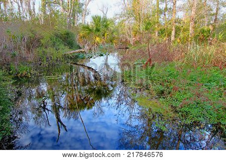Tiger Creek Preserve is a natural area located in Polk County Florida