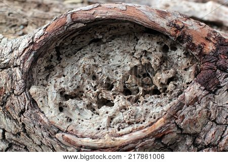 the bark of the tree with the hole in the crocodile's eyes