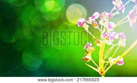 Fare right beautiful purple flowers on abstract blurred green background with natural bokeh abstract and background