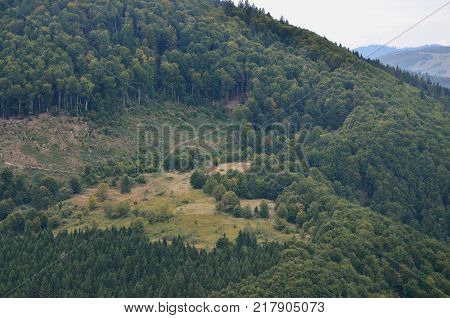 Fragment of the mountainous terrain in the Carpathians, Ukraine. The forest is forgiven by the reliefs of the Carpathian Mountains