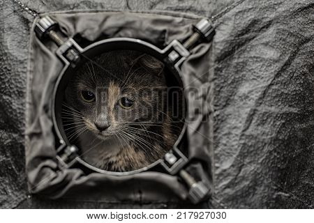 A beautiful young tri-colored cat looks attentively from the round hole of the softbox as out of the porthole.