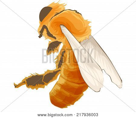 Vector Wasp, insect vector, color drawing Wildlife illustration