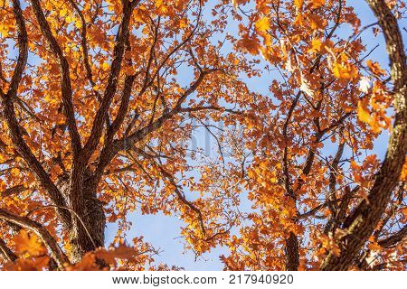 wide angle shot of wood yule log tree with orange branch leaves