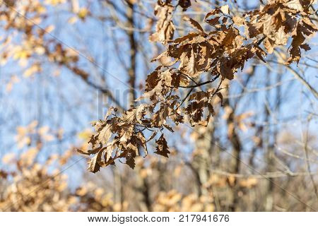 nature wood yule log tree branche with orange leaves