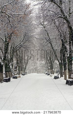 Winter nature alley in park black and whte photo