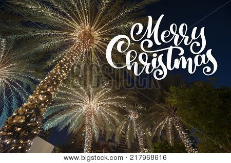 christmas background palm tree in the night city with photo overlay Merry Christmas, greeting card.