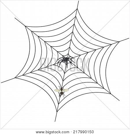 spider web with spider and fly on white background