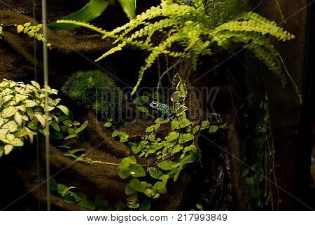 frogs, poisonous, terrariumtropical rain forest terrarium or paludarium for exotic pet animals like poison dart frogs or treefrog.