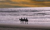 riders and horses walking on the beach poster
