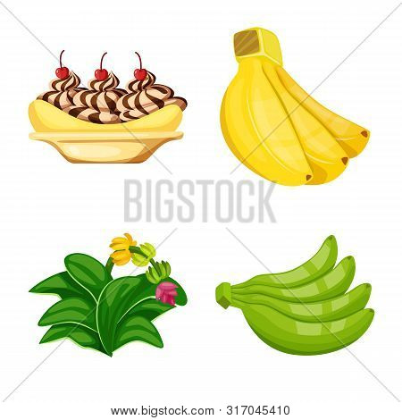 Isolated Object Of Tropical And Ripe Symbol. Collection Of Tropical And Potassium Stock Symbol For W