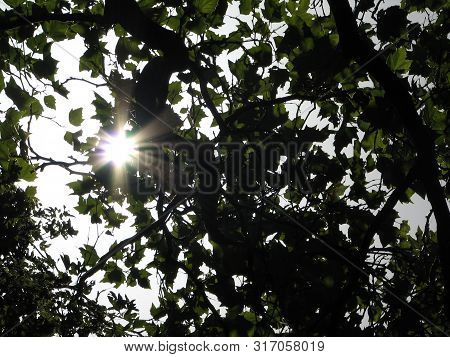 Tree Branches With Fresh Green Leaves On Blue Sky Background