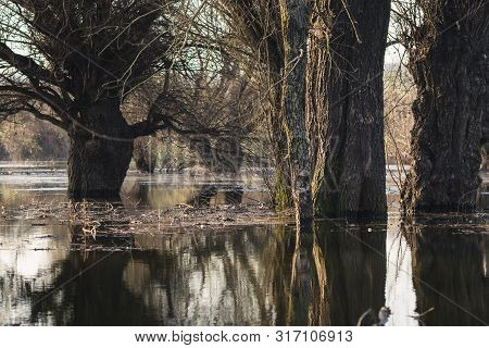 Swamp Nature Landscape. Nature Landscape. Trees In Swamp Nature. Winter In Swamp Nature. Landscape.