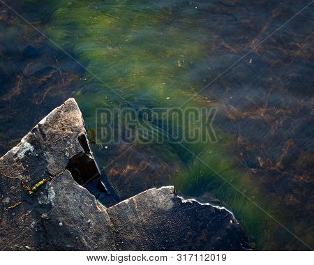 Green Grass Plant Growing Underwater On Bedrock In Lake