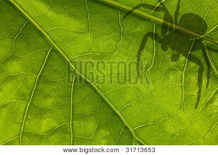 macro photo of green leaf and spider shadow poster