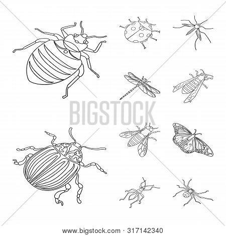 Vector Illustration Of Fauna And Entomology Symbol. Set Of Fauna And Animal Stock Vector Illustratio