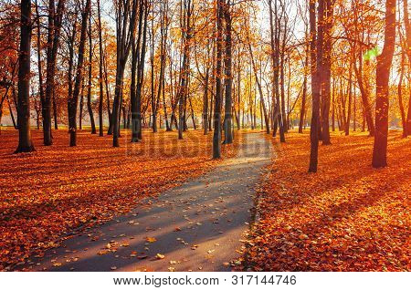 Autumn landscape - yellowed autumn trees and fallen autumn leaves in city park alley in sunny autumn evening. Picturesque park autumn scene