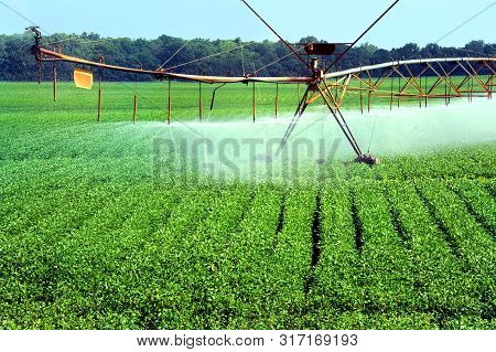 Northwest Arkansas crop receives needed water by irrigation equipment.  Spray covers crop as equipment moves across the field. poster