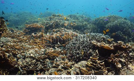 Underwater Fish Reef Marine. Tropical Colorful Underwater Seascape With Coral Reef. Camiguin, Philip