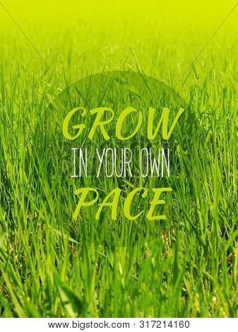 Grow In Your Own Pace - Inspirational Motivation Quote. A Young Green Grass In A Sunny Day. Natural