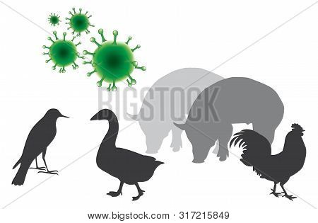 Avian Influenza. Type Of Influenza That Occurs Mainly In Birds, Outbreaks Have Occurred In Poultry I