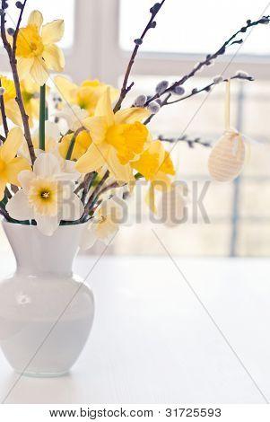 Narcissus spring flower