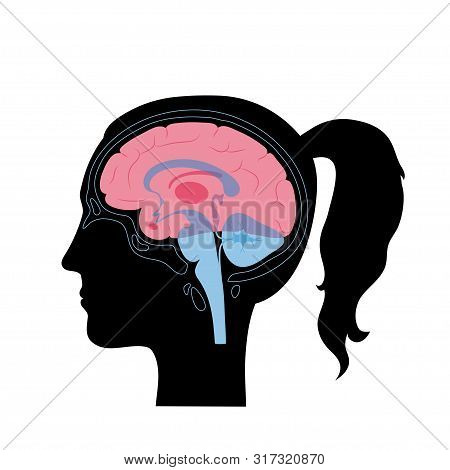 Set Of Vector Isolated Illustration Of Brain Components In Woman Head. Human Brain Detailed Anatomy.