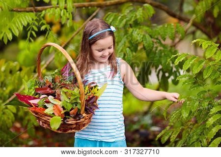 Child Picking Colorful Autumn Leaves In Basket.