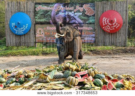 Large Catering Fruit Buffet (khantok Chang) For Elephants On Thai Elephant Day.
