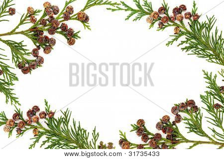 Border of cedar cypress leyland leaf sprigs with pine cones over white background.