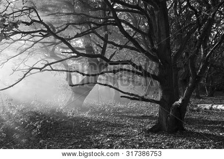 Black And White Winter Landscape Of Dormant Trees Surrounded By Smoke From A Bonfire