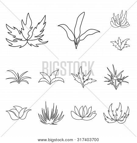 Vector Design Of Hedge And Shrub Icon. Collection Of Hedge And Floral Stock Vector Illustration.