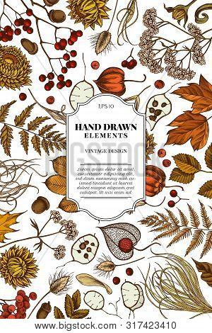 Card Design With Colored Rowan, Rowan, Acorn, Buckeye, Fern, Maple, Birch, Maple Leaves, Lagurus Fea