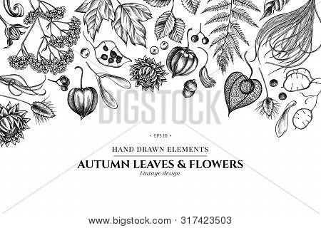 Floral Design With Black And White Rowan, Rowan, Acorn, Buckeye, Fern, Maple, Birch, Maple Leaves, L