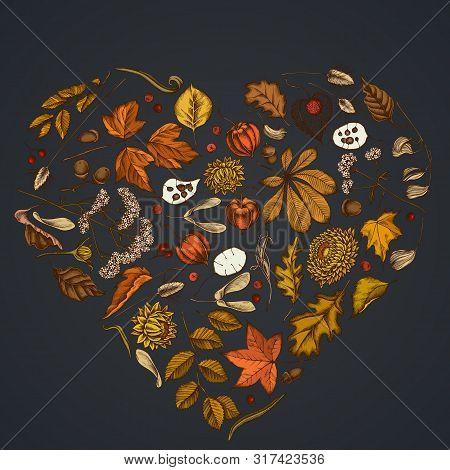 Heart Floral Design On Dark Background With Rowan, Rowan, Acorn, Buckeye, Fern, Maple, Birch, Maple