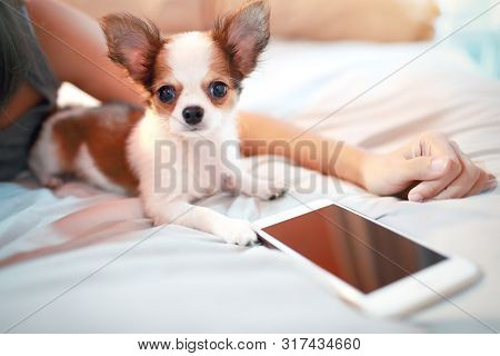 Cute Puppy Dog Lying On Bed With Smart Phone And Asian Woman