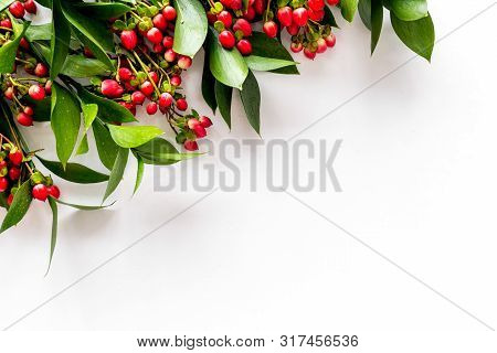 Background Frame With Green Plant And Berries Frame On White Background Top View Space For Text