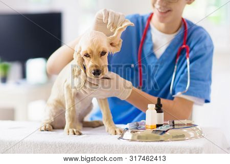 Vet Examining Dog. Puppy At Veterinarian Doctor.