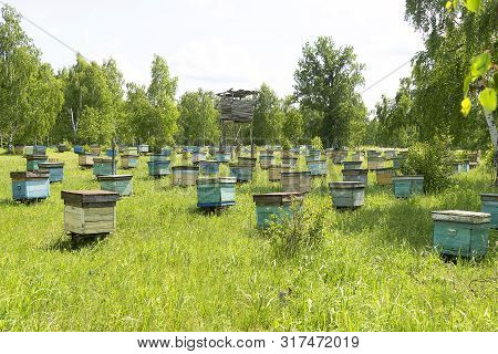 Colony Of Bees, In The Summer On The Street There Are Many Houses For Bees. Bee Hives On A Green Mea